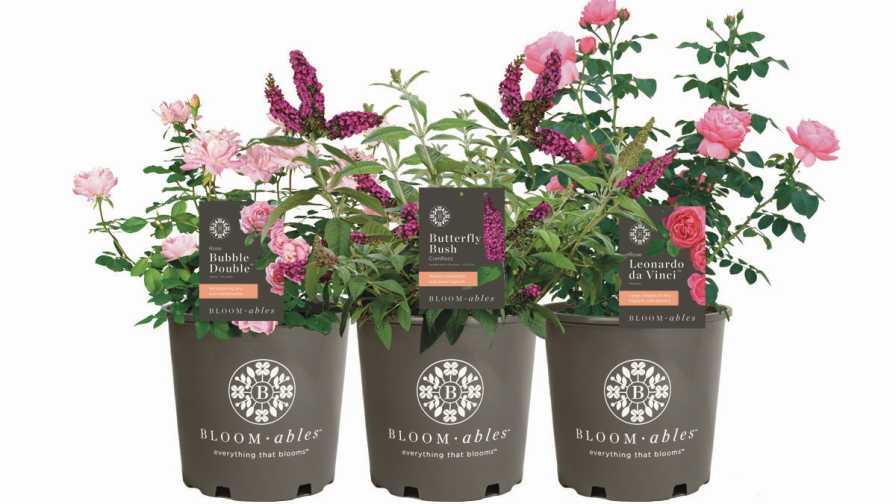 Blooming Potted Plants Archives - Greenhouse Grower