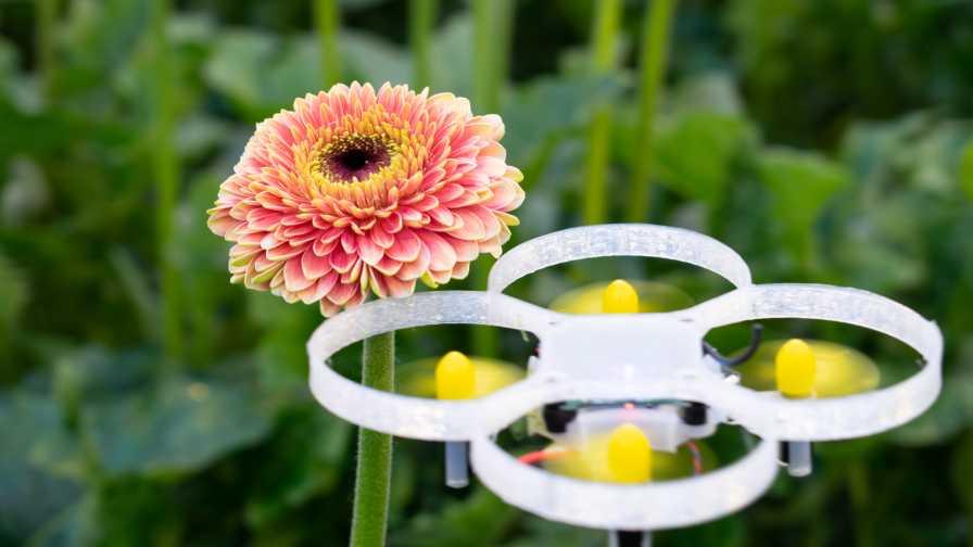 Dutch Companies Testing Drones For Moth Control In Gerbera