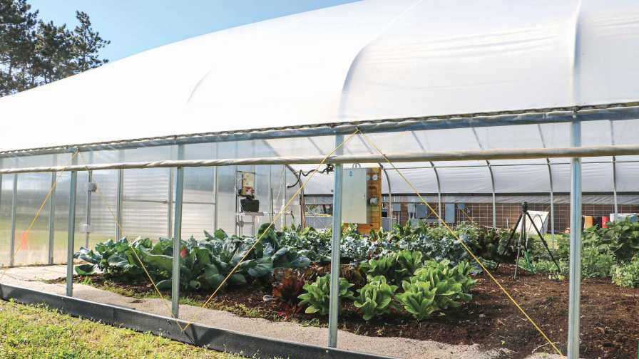 open-sided greenhouse for passive cooling