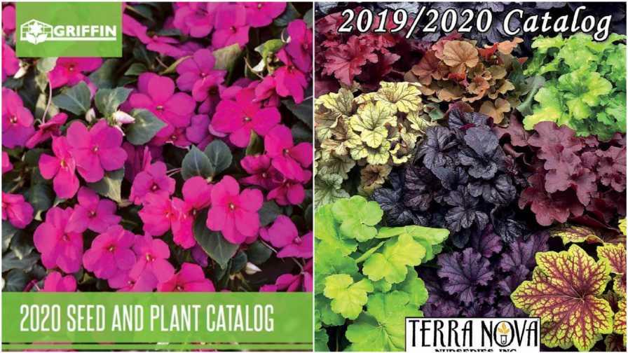 Griffin, Terra Nova Plant Catalogs