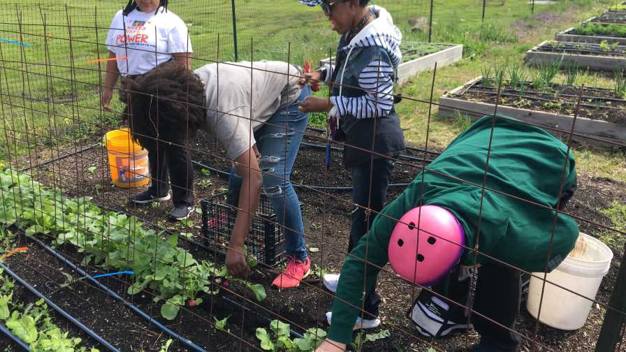 Knockout Farm, NGB Therapeutic Garden Grant
