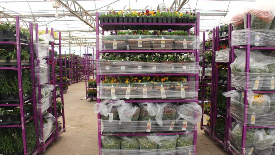 Plants ready for delivery