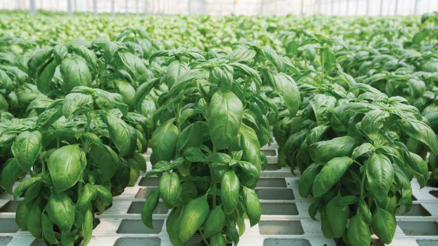 Greenhouse vegetables in soilless culture