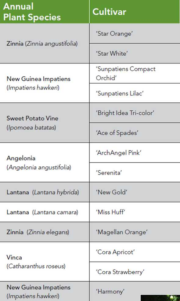 List of annuals that show resistance to Phytophthora