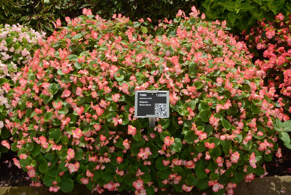 Metrolina Greenhouses: 17 Plant Varieties That Rocked 2019 Field Trials