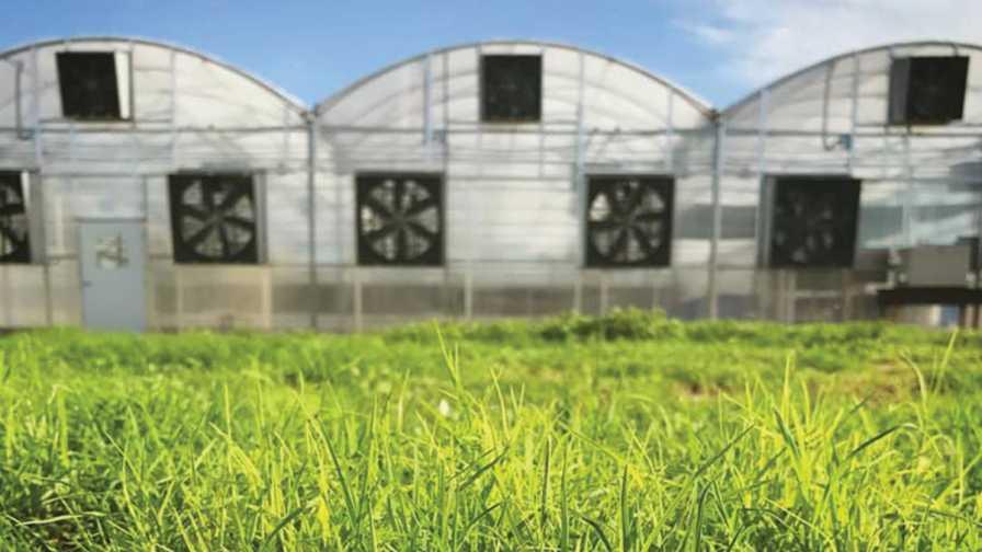 Specialty greens facilities at Merchant's Garden