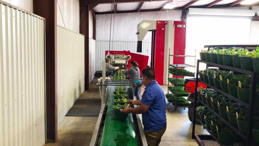 plant material handling in the greenhouse