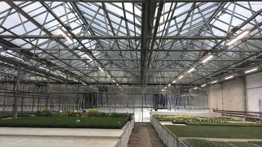 Dimmable LED fixtures at Peace Tree Farms Candidus