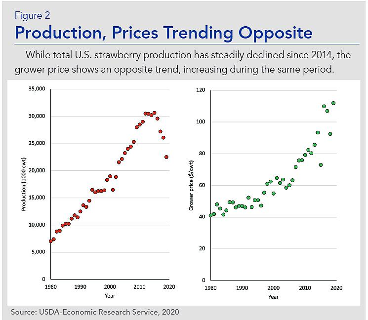 Greenhouse strawberry production pricing trends graphic