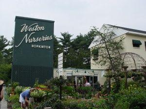 Weston Nurseries