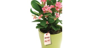 Low Prices Do Not Sell More Plants