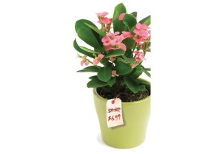 Low prices do not sell more plants - price tag on plant