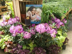 Holcomb Garden Center Mother's Day rhododendrons
